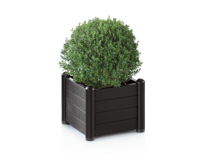 pflanzkasten in verschiedene ausf hrungen blument pfe und pflanzgef e bader. Black Bedroom Furniture Sets. Home Design Ideas