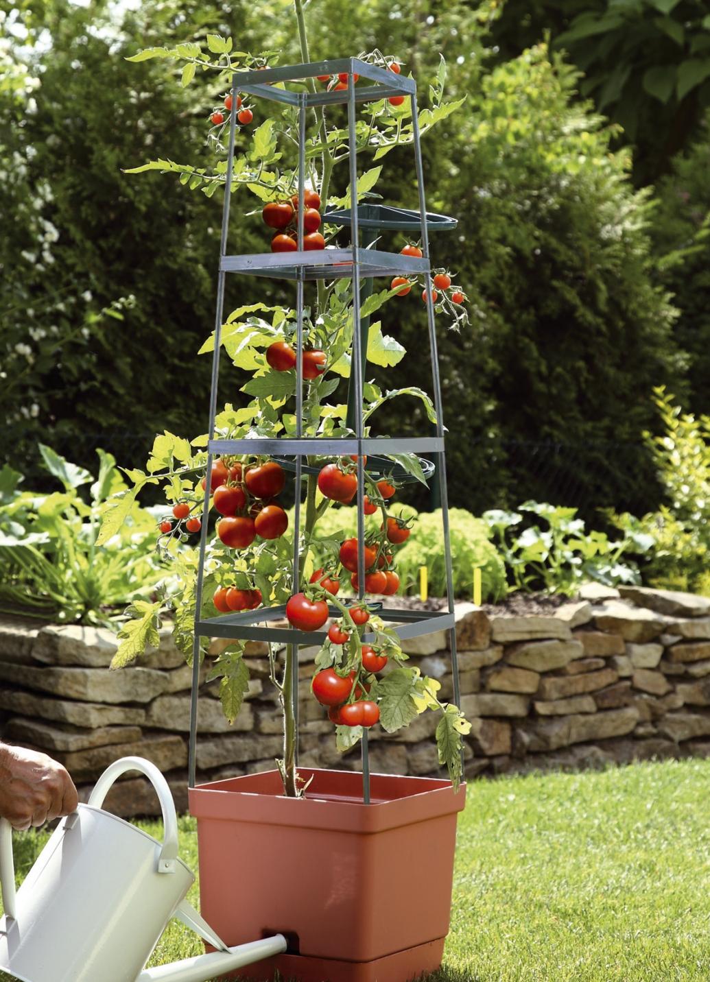 tomaten rankhilfe maxitom in 2 farben rosamunde. Black Bedroom Furniture Sets. Home Design Ideas