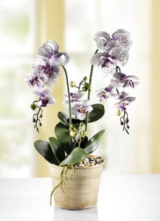orchidee im topf kunst textilpflanzen bader. Black Bedroom Furniture Sets. Home Design Ideas