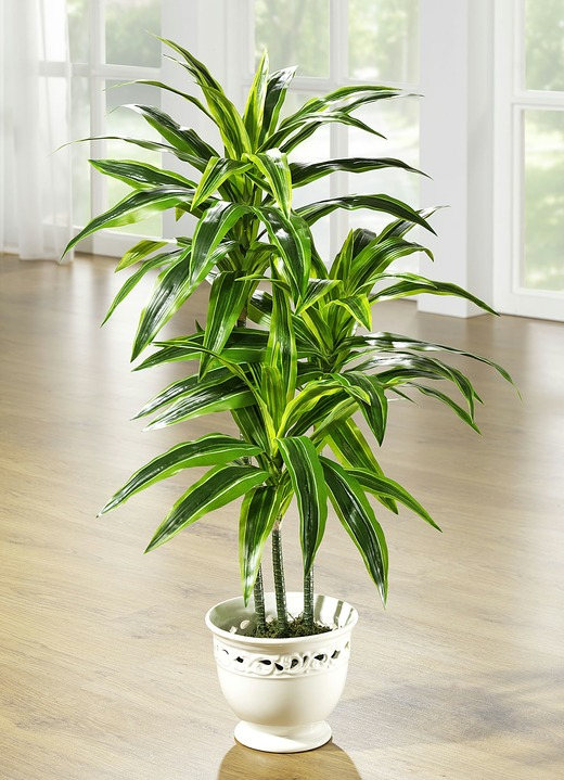 dracena palme im topf kunst textilpflanzen bader. Black Bedroom Furniture Sets. Home Design Ideas