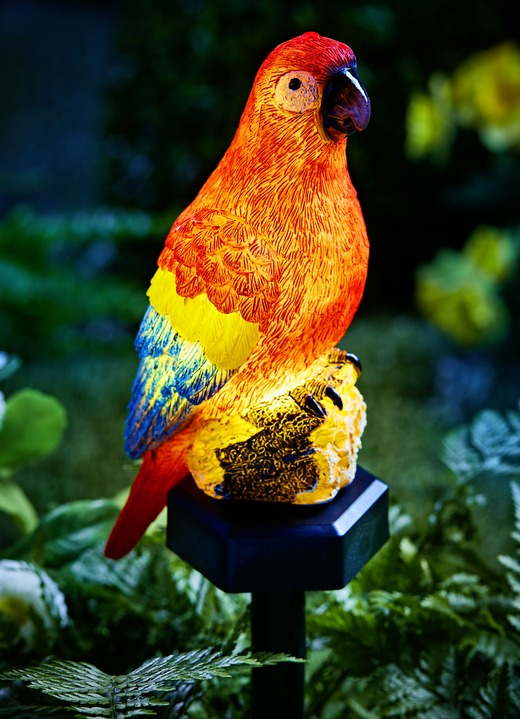 Mit Papagei Erdspieß Papagei Mit Erdspieß Solar Solar m80Nnw