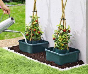 Tomaten-Aufzuchthilfe - Garten im Frühling